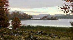 Orilla Lago Thompson, Aysen.